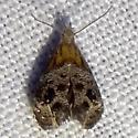 Tebenna gnaphalieila, Hodges #2647 - Tebenna gnaphaliella