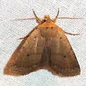 Roadside Sallow Moth - Hodges #9944 - Metaxaglaea viatica