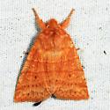 Mustard Sallow - Pyreferra hesperidago