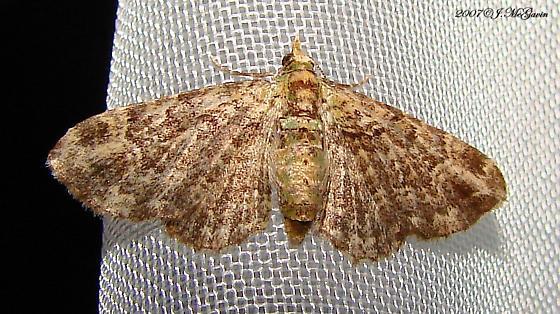 Green Pug moth? - Pasiphila rectangulata