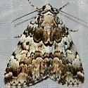 False Underwing - Allotria elonympha
