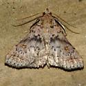 Bent-winged Owlet Moth - Hodges #8370 - Bleptina caradrinalis