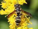Wasp ID Request - Parancistrocerus leionotus - female