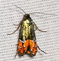 Heliodinidae sun moth? - Lepidotarphius perornatella
