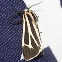 Harnessed Tiger Moth - Hodges #8169 - Apantesis vittata - male