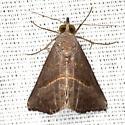 Hypena degesalis - Hodges #8459 - Hypena degesalis