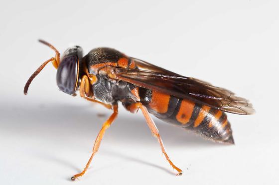 farmapest yaban arısı resimleri ile ilgili görsel sonucu