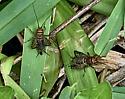 Crickets?