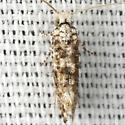 Speckled Xylesthia Moth - Hodges #0317 - Xylesthia pruniramiella
