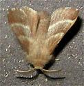 Moth 2 - Malacosoma americanum
