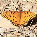 Gulf Fritillary - Hodges#4413 - Dorsal - Agraulis vanillae
