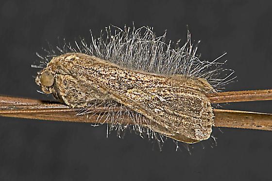 fungus and moth