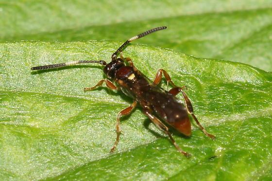 Unknown Hymenoptera - female