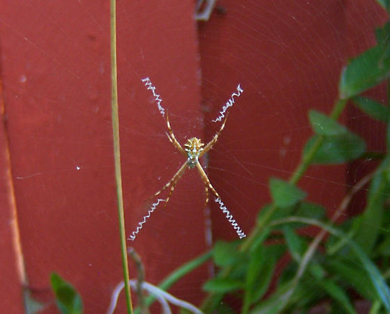 This spider seems to have a fierce