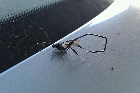 Flying Scorpion