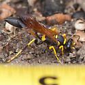 Sceliphron caementarium - male