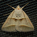 Common Ptichodis  - Ptichodis herbarum
