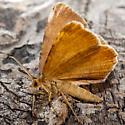 Unknown Moth - Macaria brunneata - male