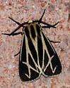 Tiger Moth #1 - Apantesis