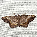 One-spotted Variant Moth - Hodges #6654 - Hypagyrtis unipunctata - female
