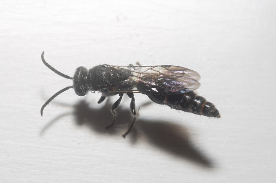 Typhiid? - male