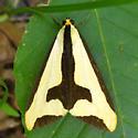 Tiger moth? - Haploa clymene