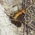 Butterfly ID? - Chlosyne californica