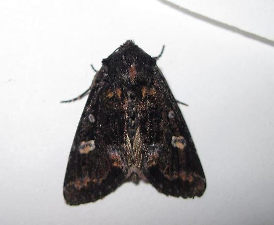 ive seen these submitted before/but i never hatched one before!!!!!!!!!!!here it is who is it? - Spiramater lutra