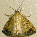 Purple-backed Cabbageworm - Hodges#4897 - Evergestis pallidata