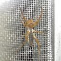 Wind Scorpion ID Request