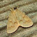 Birch Dagger Moth - Acronicta betulae
