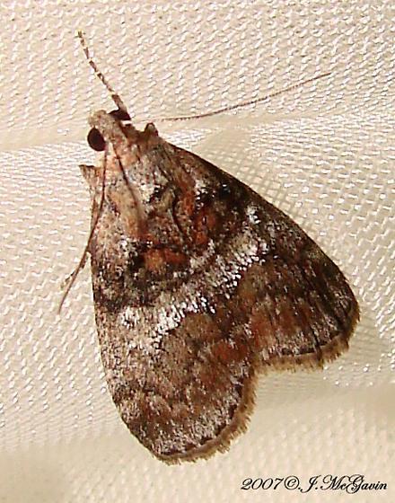 Moth 2007 june 1z - Pococera
