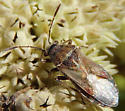 Bug July 30