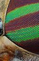 Female Striped Horse Fly - Tabanus lineola - Tabanus lineola - female