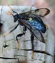 Wasp of some sort? - Cimbex americanus