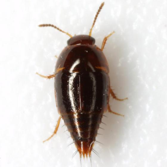 Coproporus