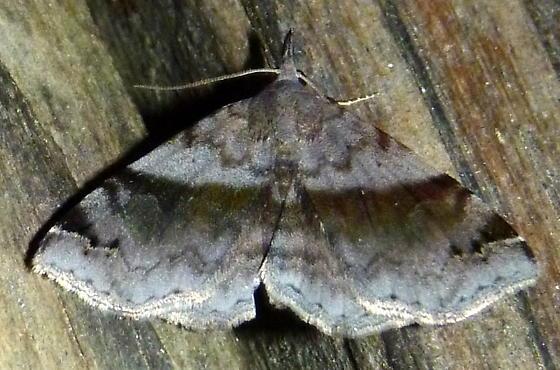 04/05/2020 moth - Spargaloma sexpunctata