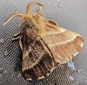 Eastern Tent Caterpillar Moth? - Malacosoma americana