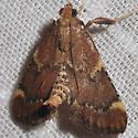 5526 - Hypsopygia intermedialis