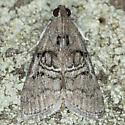 Pococera subcanalis - male