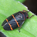 AL - Spittlebug - Prosapia bicincta