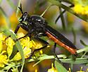 Ospriocerus abdominalis - Ospriocerus aeacus