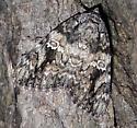 Moth ID Request - Catocala ilia