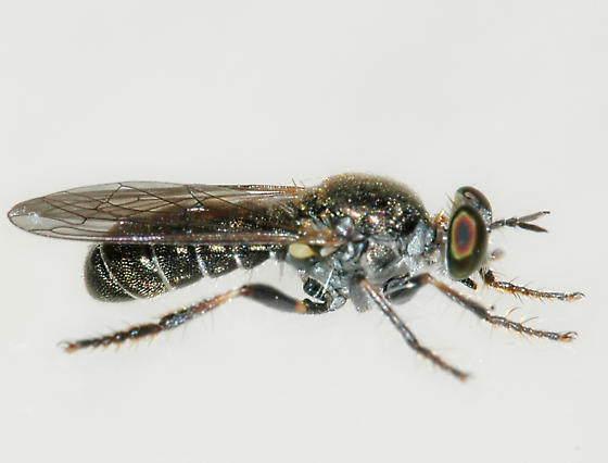 BG2747 280-120a - Atomosia melanopogon