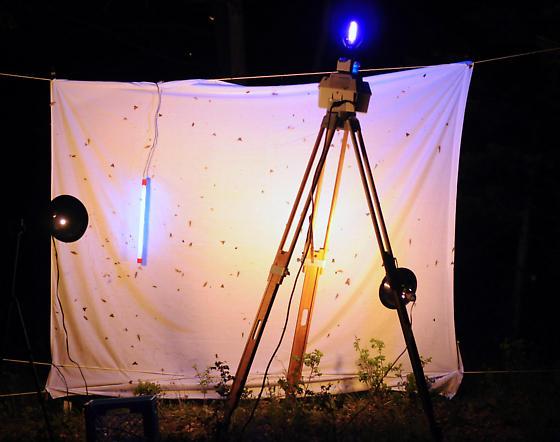 Mercury vapor black light set-up
