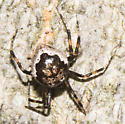 Spider on tree trunk