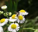 Pollinator ID Request