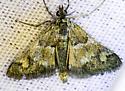 Death Valley Moth - Pyraloidea? - Noctueliopsis