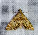 brown and orange patterned moth? - Petrophila fulicalis