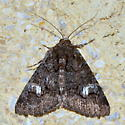 Please help us to identify this moth. - Heteranassa mima